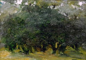 Grande uliveto - Olio su tela 50 x 70 - 2003